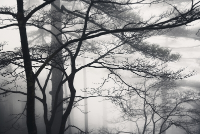 Shrouded In Fog In The Yellow Mountains