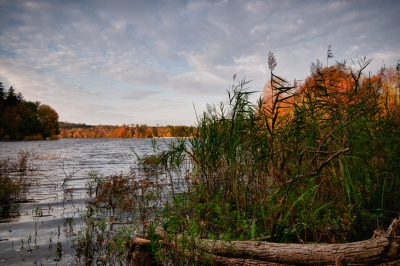 Fall, Reservoir, Log, Reeds, Trees, Water, Sky, Hdr