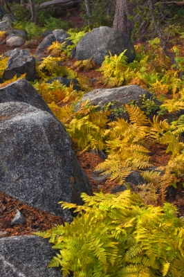Siesta Lake Autumn Ferns