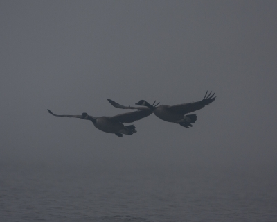 In From The Fog