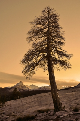 Lone Tree Atop Pothole Dome Sunset