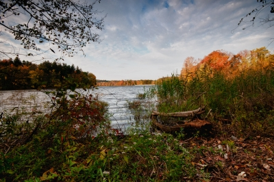 Fall, Reeds, Ground, Bushes, Reservoir, Trees, Sky, Hdr