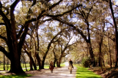 The Oaks That Surround Us…