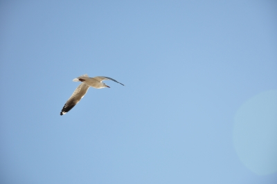 Seagull High In The Sky