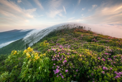 Roan Highlands Rhododendron & Fog Magic Hour