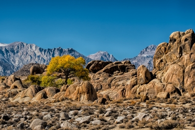 Lone Tree In The Alabama Hills