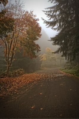 Foggy Morning Fall