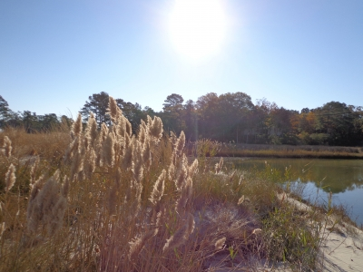 Reeds At Cubitt Creek