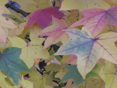 Shades Of Autumn Leaves