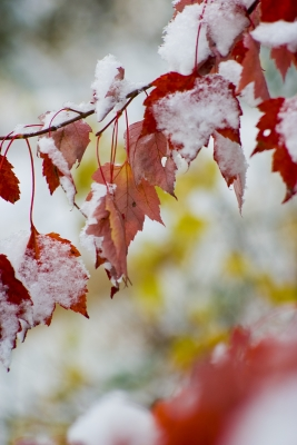 Fall Meets Winter