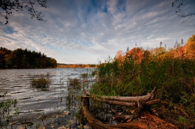 Fall, Reservoir, Trees, Log, Sky, Clouds, Hdr