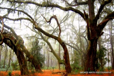 Our Dissapearing Coastal Oak Forests