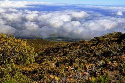 Cloud Blanket – Haleakala