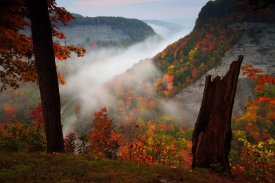 Fog Over Genesee River At Dawn