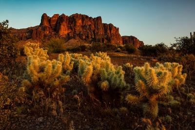 Cholla Cactus And Superstition Mountains, Arizona