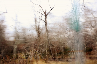 Landscape In Motion