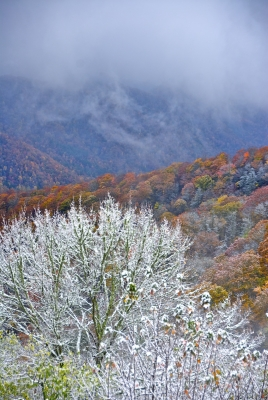 Early Snow In The Smokey Mountains