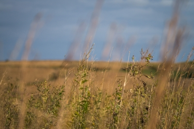 Prarie Grass And Autumn