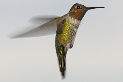 Hummingbird Motion