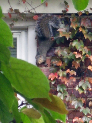 Squirrel On Brick