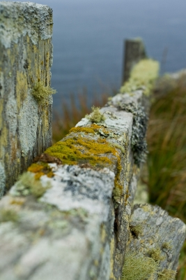 Fence Detail, Point Reyes