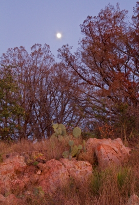 Moon In The Hill Country