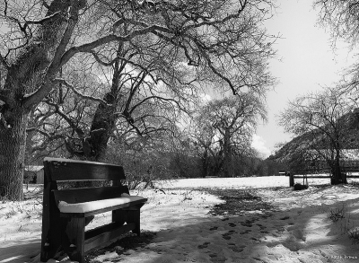 Snow Covered Bank