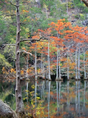 Autumn In The Cypress Swamp