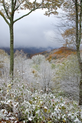 Early Autum Snow