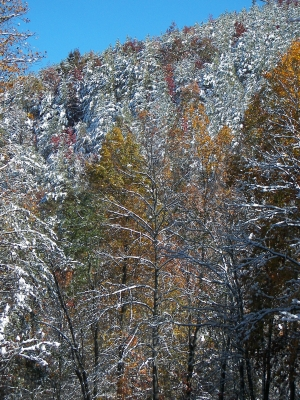 Cherokee National Forest In Snow