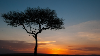 Sunset On The Kenyan Savanna