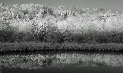 Black And White Winter Pond Reflections