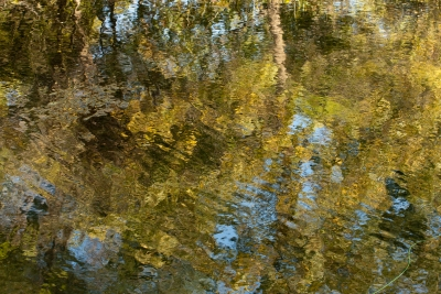 Reflections Of A Fall Day