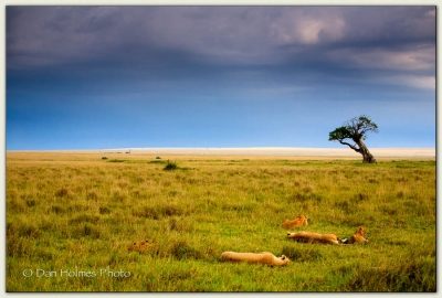 Afternoon On The Mara