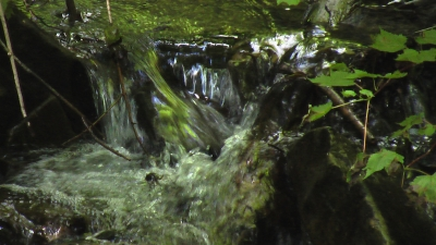 Gurgling Waters At Ricketts Glen