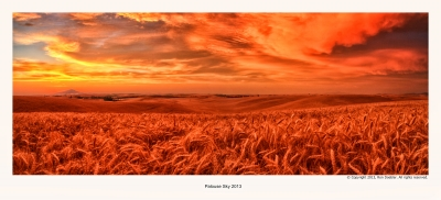 Palouse Wheat
