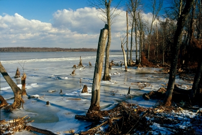 Potomac River Winter No. 016