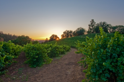 Sunset And Vine