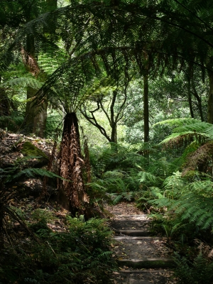 Walking Trail At Leura