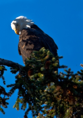Eagle In After Dinner Cleanup
