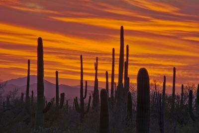 Sunset, Saguaro National Park