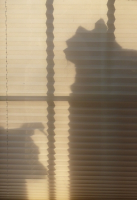 Blind,.. Dog And Cat