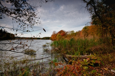 Fall, Shrubs, Trees, Reservoir, Sky, Log, Hdr