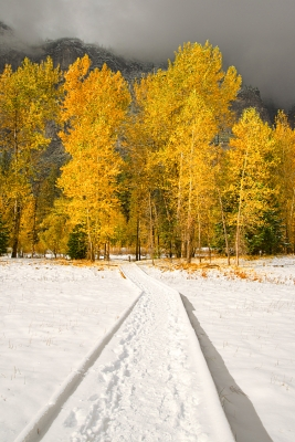 Snow And Aspens