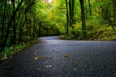 Forest Canopy Road