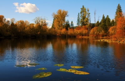 Autumn Reflection With Cloud