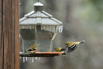 Goldfinch Landing