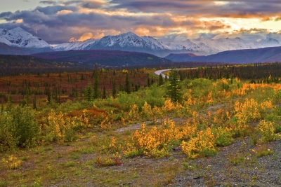 Alaska,park Highway Near Denali, Fall Colors,sunrise, 阿拉斯加, 迪纳利,  秋色