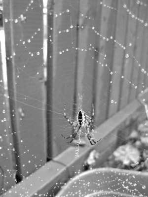 Drops On A Web