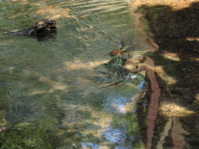 Abstract Creek Reflection